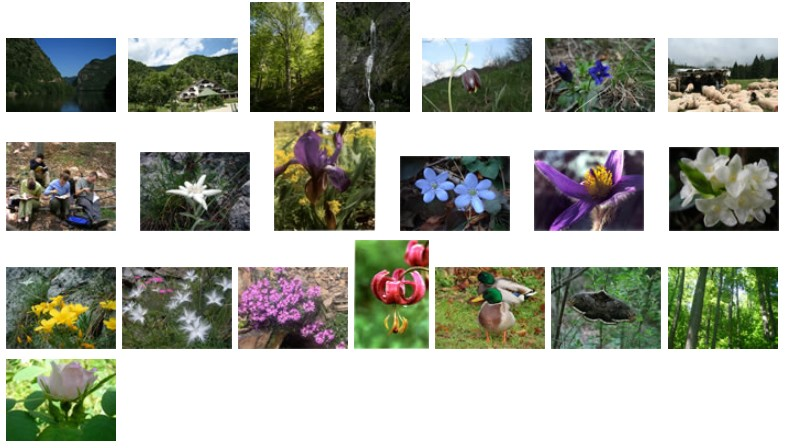 Parc national Cozia nature et fleurs