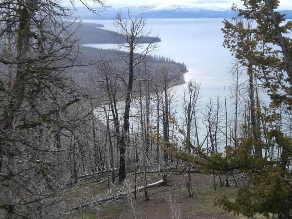 Point de vue sur le lac Yellowstone