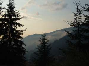 Rhodopes forets en Bulgarie