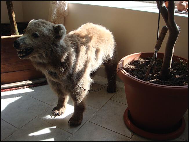 Sissian ours empaillé dans le hotel de notre hotel