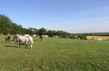 slavonie chevaux lipizzan