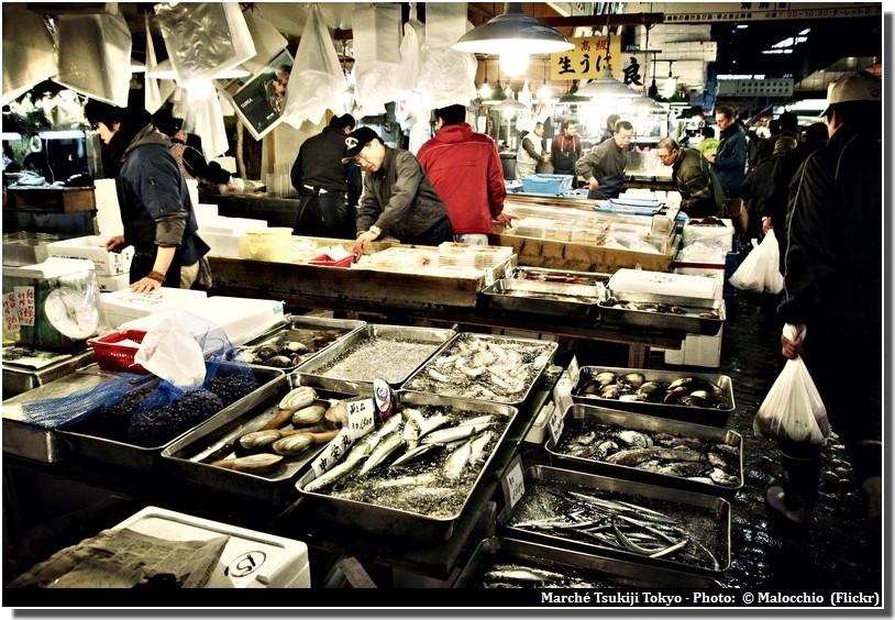 Marché Tsukiji à Tokyo ; le royaume des produits de la mer (Tourisme Tokyo)