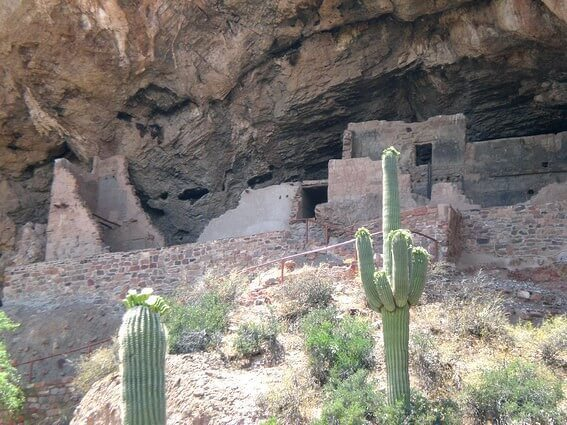 Tonto NM cactus