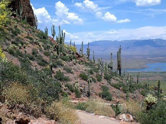 Tonto National monument paysage et cactus