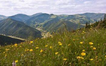 Ukraine Carpates Vallée des Narcisses