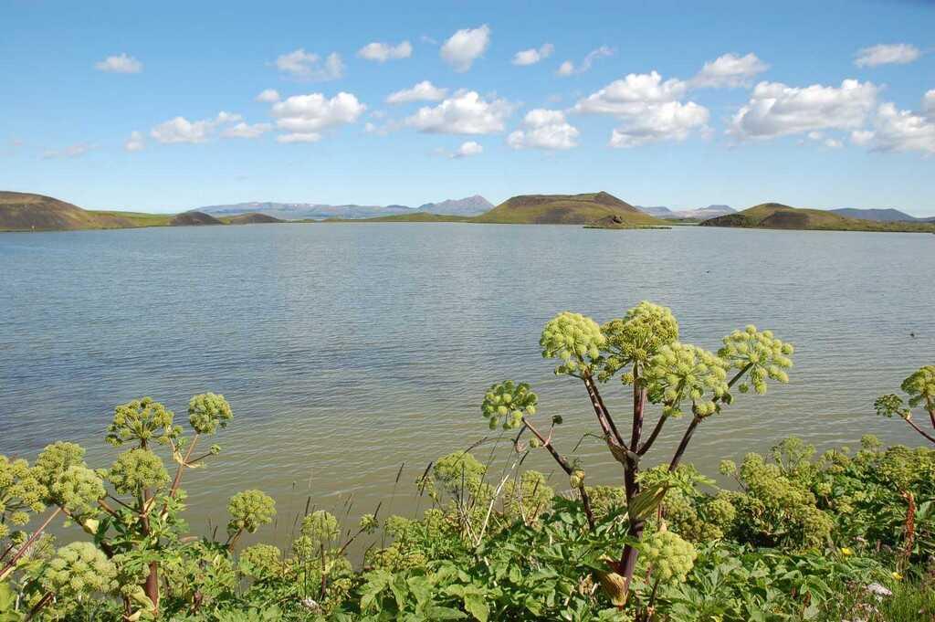 angelique au bord d'un lac sur l'ile vigur