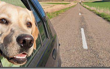voyager avec un animal domestique en europe
