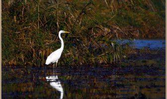 delta du danube oiseau