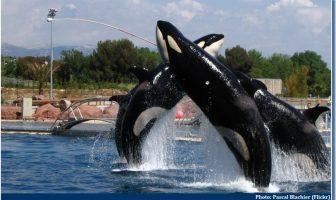 orques marineland antibes