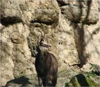 parc national cozia faune