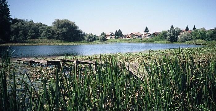 réserve ornithologique de la rivière sava à Lonjsko polje
