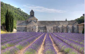 abbaye de senanque vaucluse