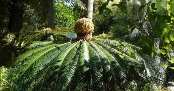 palmier jardins de puerto de la cruz tenerife