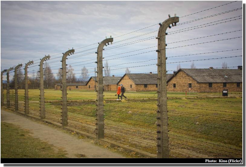 Auschwitz birkenau fils barbelés