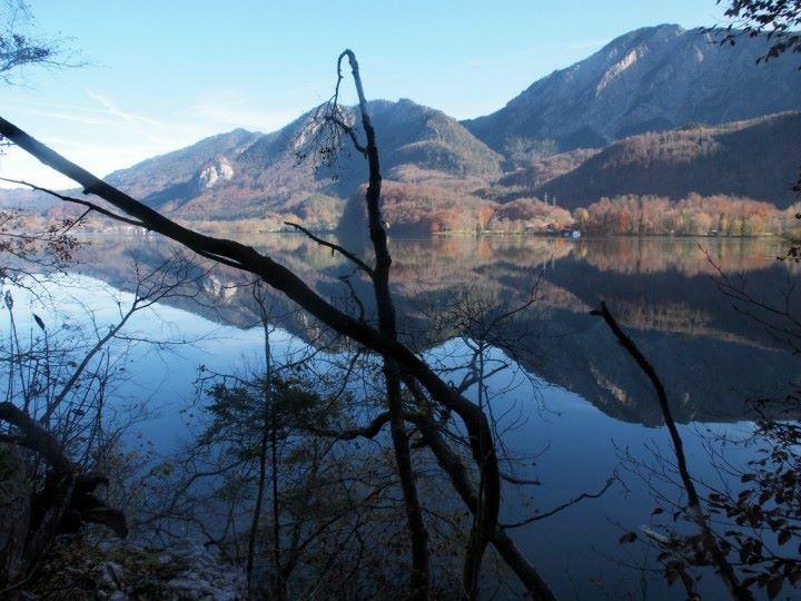 kochelsee lac kochel tronc d'arbre
