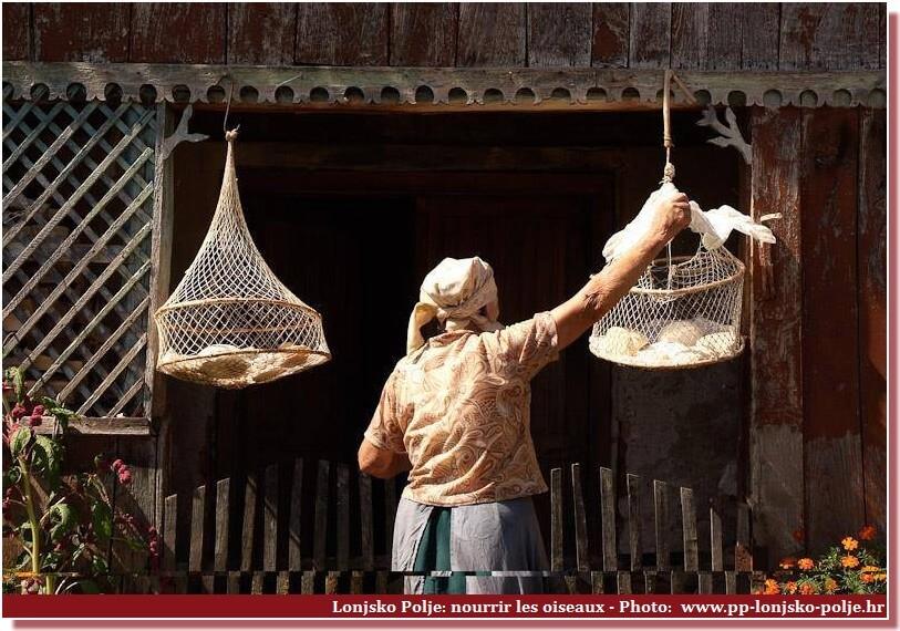Lonjsko Polje nourrisage des oiseaux