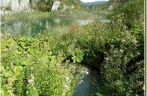 Parc de Plitvice Vegetations lacustres
