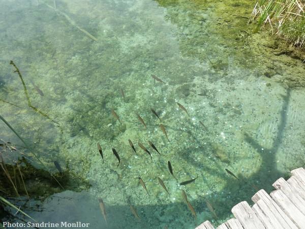 Les plus belles photos des lacs et chutes de Plitvice : ce qu'en pensent les voyageurs d'IDEOZ 7