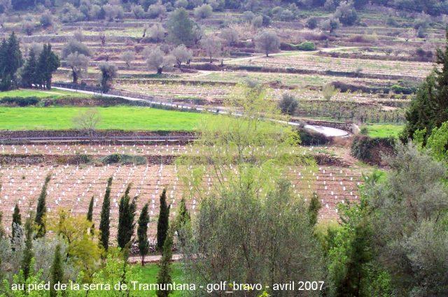 cultures en terrasse à Majorque