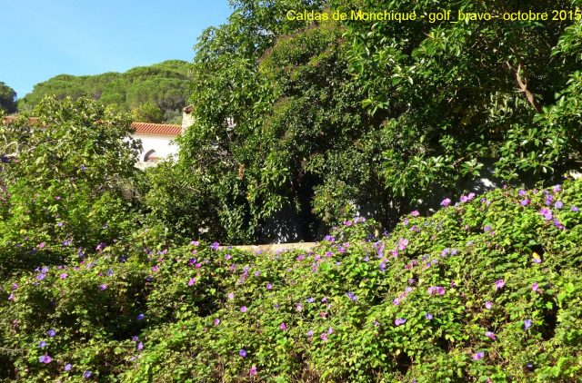 Algarve: Caldas de Monchique