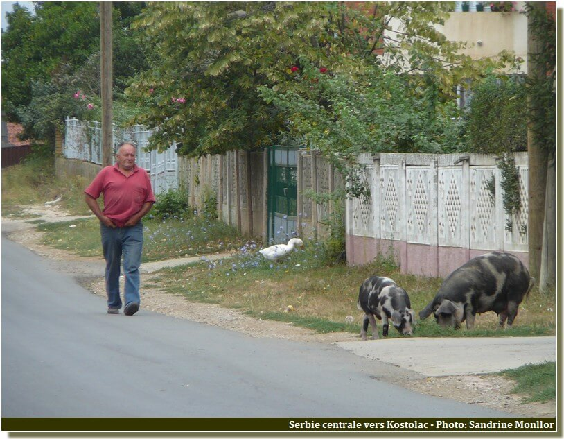 Animaux en liberté en serbie centrale