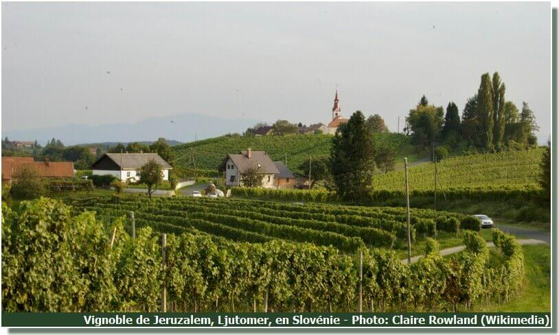 Vignoble de Jeruzalem Ljutomer en Slovénie