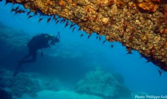 plongée en Croatie