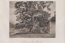 Heinrich Christoph Gottlieb Breling Peinture Louis II à Linderhof Lindenbaum