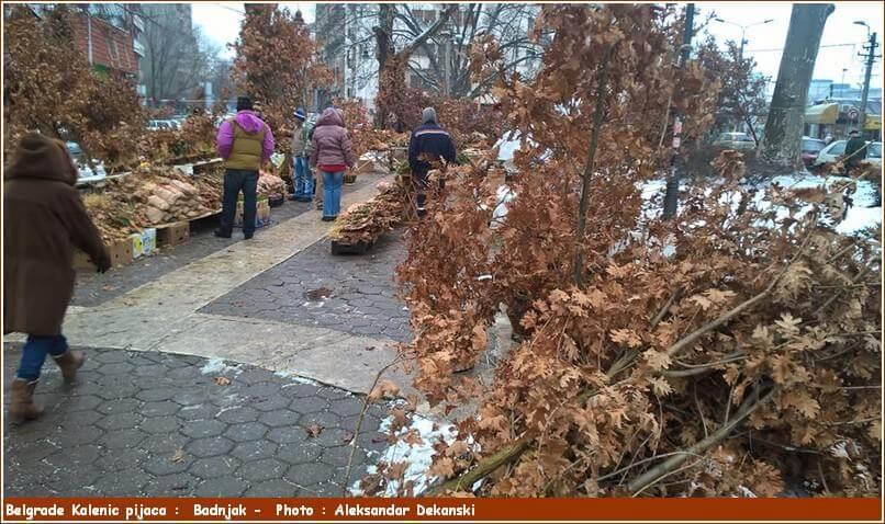 Belgrade Kalenic pijaca branches de chênes Badnjak