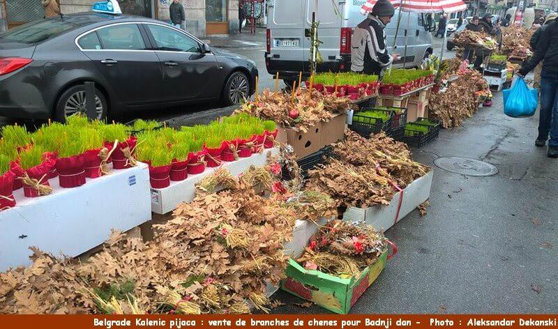 Belgrade Kalenic pijaca branches de chênes pour Badnji dan