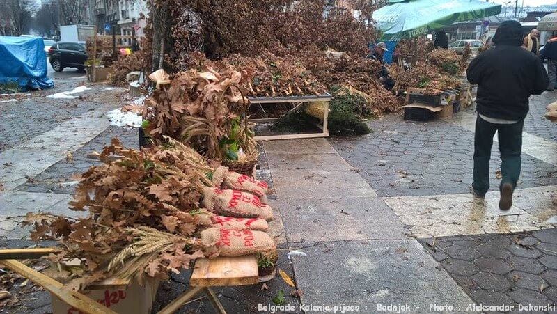 Belgrade Kalenic pijaca vente de branches de chênes Badnjak