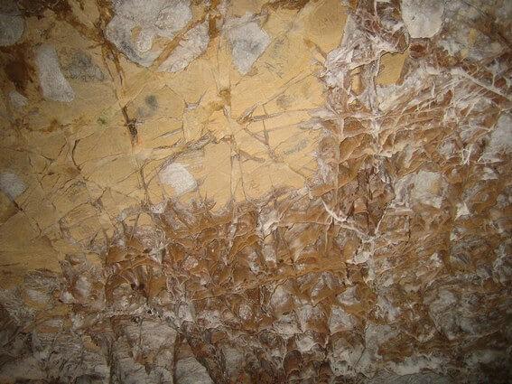 Wind Cave National Park chauve-souris