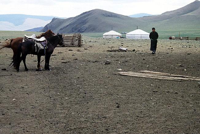 Chevaux mongols au camp