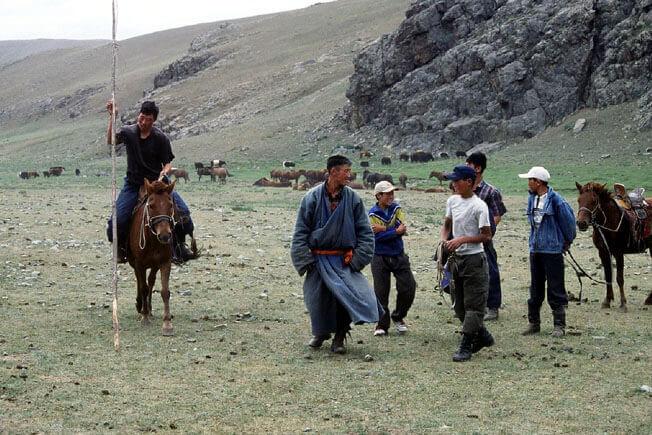 Harde de chevaux mongols