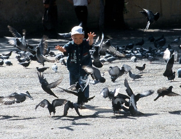 Oulan bator enfant avec des pigeons