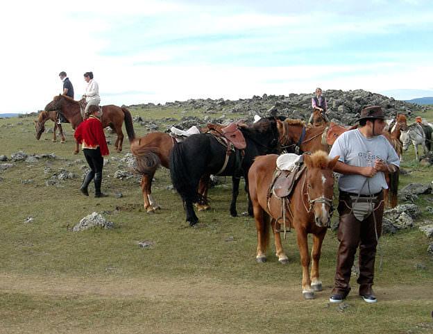 chevaux mongols dans les steppes