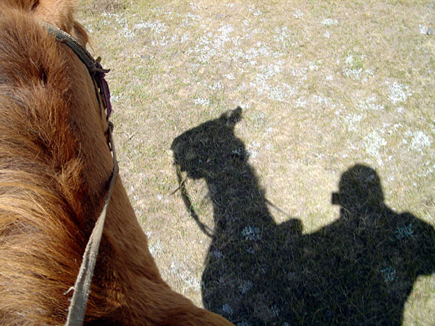 ombre cheval en mongolie
