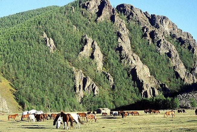 chevaux mongols camp du yack