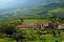 Istrie verte vignes près de Motovun