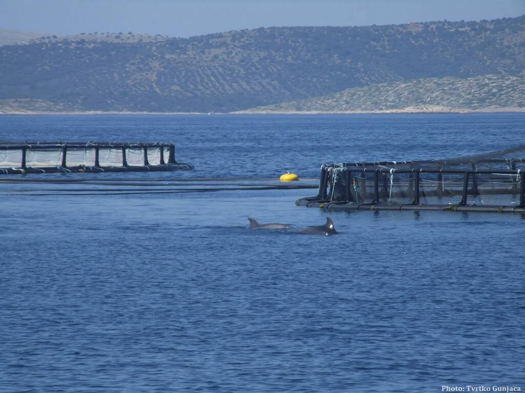 Dauphins aperçus dans les îles Kornati depuis le bateau Luigia