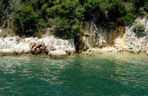 eaux translucides de l'Adriatique en Istrie