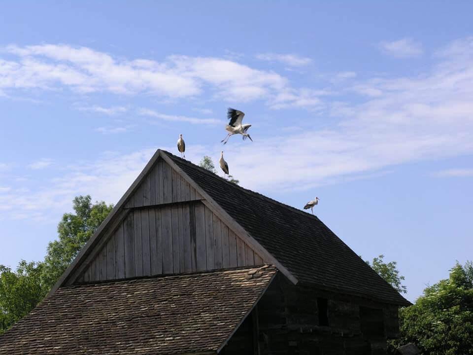 Stara lonja cigognes dans le parc naturel Lonjsko polje