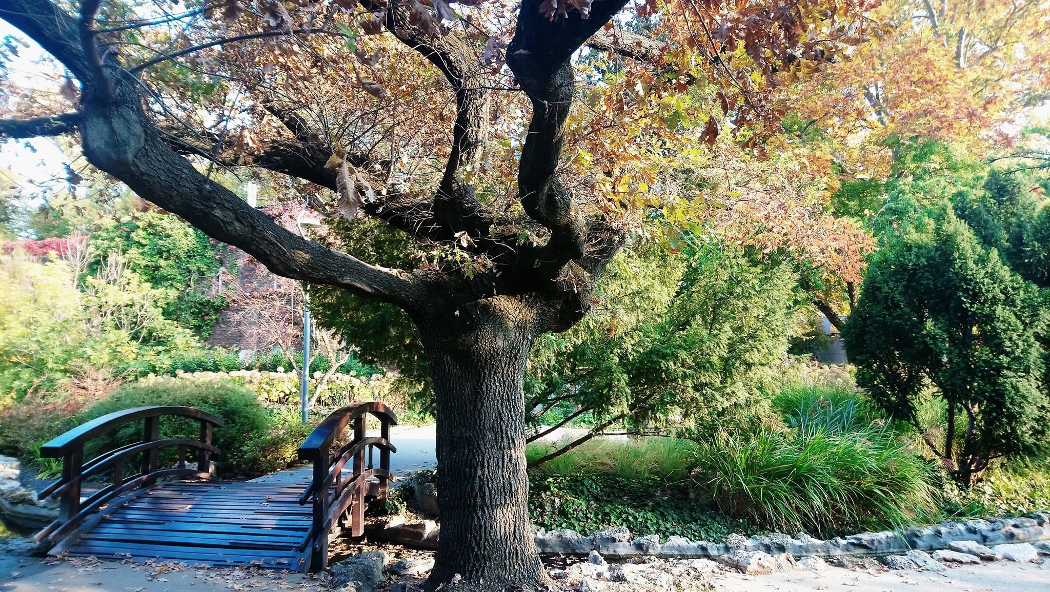 jardin japonais sur l'île marguerite