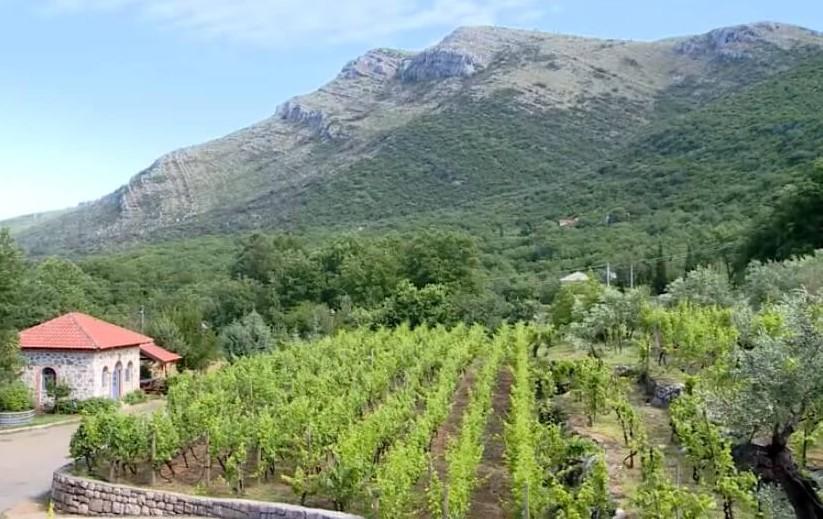 vignes au monastère Tvrdos près de Trebinje en republique serbe de Bosnie