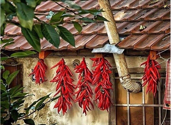 poivrons séchés sur une façade en serbie