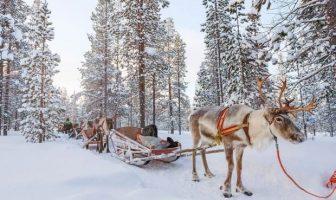 Rovaniemi traineau avec ses rennes en Laponie