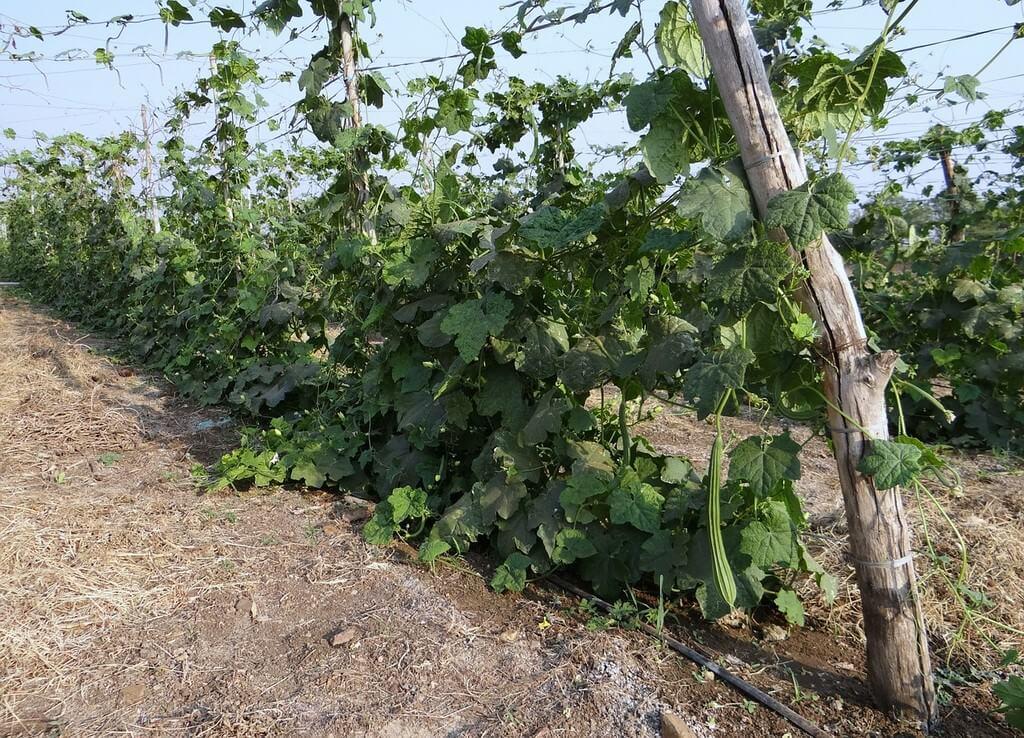 Vignobles de Turai vins crétois