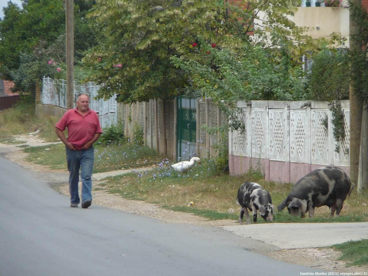 Passant marchant sur la route de Rajinovac