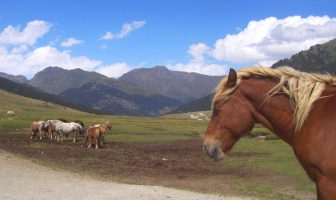 chevaux en liberté dans les pyrénées espagnoles
