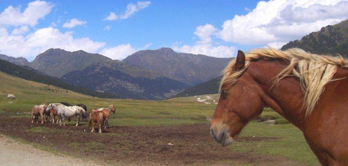 Pyrénées espagnoles: sauvages et grandioses